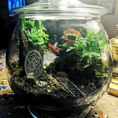New Terrarium | Added Springtails