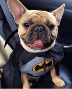 Check out these hilarious French Bulldog Costumes!