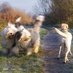 waving your tails...ft Rhea & Lisa - #RheaenLisa