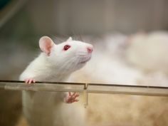 Please sign and spread the message  Eurogroup for Animals #animalrights #animals