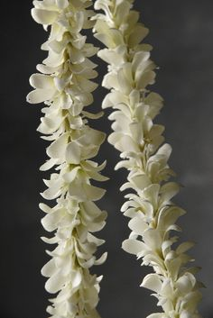 Jasmine other and garlands on pinterest for What do we use silk for