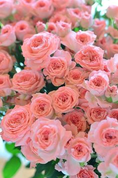Amazing Flowers, Beautiful Roses, Pretty Flowers, Beautiful Things, Pink Roses, Pink Flowers, Beautiful Flowers Wallpapers, Spring Blossom, Love Rose