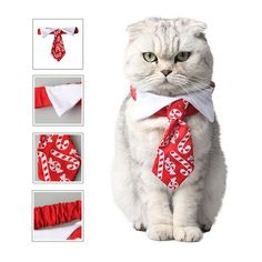 New cheap pet gift uploaded at SketchGrowl: Christmas Bow Tie Cat Costume Gifts For Pet Lovers, Cat Gifts, Cat Lovers, Animals And Pets, Baby Animals, Cute Animals, Paralyzed Dog, Cheap Pets, Cat Bow Tie