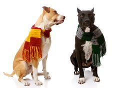 Set of Custom Size Gryffindor & Slytherin House Scarves for Dogs: via Etsy.