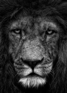 """""""I'm on Aslan's side even if there isn't any Aslan to lead it. I'm going to live as like a Narnian as I can even if there isn't any Narnia."""" ~CS Lewis"""