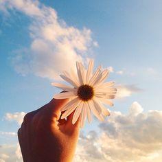 flores | Tumblr