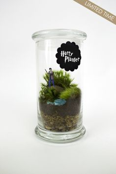Harry Planter // Harry — Moss Love Terrariums // moss terrarium