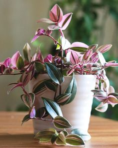 """2,019 Likes, 30 Comments - Morgan (@plantingpink) on Instagram: """"See what clippings can become? With a fast growing plant like this Tradescantia, clippings can fill…"""""""