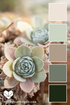 Sage green and neutrals nature inspired color! Informations About Dusty Green + Neutral Color Palette - Succulent Color Scheme Pin Y Color Schemes Colour Palettes, Pastel Colour Palette, Bedroom Color Schemes, Neutral Colour Palette, Bedroom Colors, Color Combos, Green Color Schemes, Color Palette Green, Mauve Color