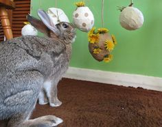 Got a bored bunny? Feeling crafty? I've a new toy idea for you to make for your bunnies. Find out the details here.