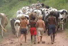 Image result for kids art herding cattle