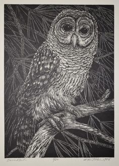 """This vintage public domain owl image has no copyright restriction and is free to use in personal and commercial work.  That the owl symbolizes intuition, and the """"ability to see what others cannot see."""".  The owl also symbolizes wisdom, change, and a messenger or 'announcer' of death.  If you want to read more about this stuff, check out this article on spirit animals. Vintage Owl, Vintage Images, Tarot, Iron On Embroidery, Embroidery Transfers, Scientific Drawing, Illustrator, Barred Owl, Nature Illustration"""