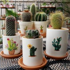Shop online for all your Cactus and Succulent must haves. Our selection of decorative planters will help you add plenty of personality to your space. Succulent Terrarium, Cacti And Succulents, Planting Succulents, Planting Flowers, Watering Succulents, Cacti Garden, Succulent Arrangements, Cactus Care, Cactus Flower