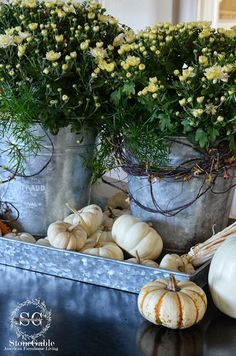 FALL AROUND THE KITCHEN at Stonegable} galvanized tray with galvanized buckets filled with mums & asparagus ferns. Baby Boo pumpkins scattered around-perfect fall vignette