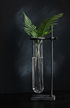 Test tube plant deco