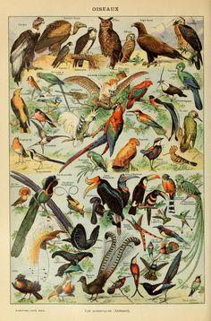 Le Larousse pour tous : Oiseaux