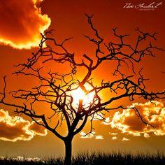 Tree and sun