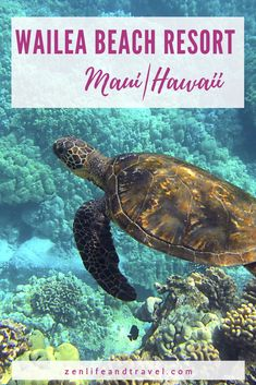 If you're looking for comfortable luxury in Maui, check out the Wailea Beach Resort. This family-friendly Hawaii hotel has great amenities, food, and is located in the popular Wailea area, close to shops and restaurants. Plus I'll show you where to find the famous ALOHA sign on Maui!!| Hawaii Hotels | Maui Hotel | Marriott Hotel in Maui Hawaii | Marriott Rewards Points | USA Maui Resorts, Hawaii Hotels, Maui Hawaii, Hawaii Travel, Hotels And Resorts, Travel Usa, Luxury Hotels, Luxury Travel, All About Hawaii