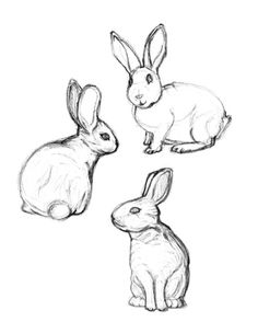 Marvelous Drawing Animals In The Zoo Ideas. Inconceivable Drawing Animals In The Zoo Ideas. Bunny Sketches, Animal Sketches, Art Drawings Sketches, Animal Drawings, Easy Drawings, Sketch Drawing, Drawing Ideas, Drawing Reference, Rabbit Drawing