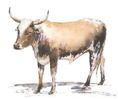 Nguni Watercolour,  27x23cm Watercolours, Watercolor Paintings, Moose Art, Wildlife, African, Birds, Animals, Animales, Water Colors