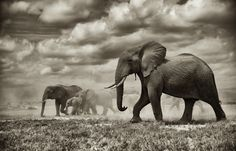 The walk for water Photograph by Sean Dundas -- National Geographic Your Shot