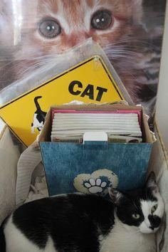 Rikki's Refuge Cats #541   - www.rikkisrefuge.org - Sybil in a box!