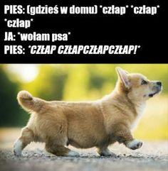 epicjump - Ministerstwo śmiesznych obrazków - KWEJK.pl Very Funny Memes, Wtf Funny, Funny Lyrics, Komodo Dragon, Vintage Cartoon, Cute Beauty, Animal Memes, Best Memes, True Stories