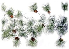 9 Foot Artificial Smokey Pine Garland with Pine Cones Christmas Decor Liberty Floral http://www.amazon.com/dp/B00G6UM97U/ref=cm_sw_r_pi_dp_OoRVtb0P962K1AYK ($27.59)