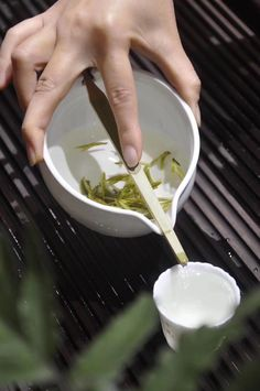 MoriMa Tea is an online Chinese Tea retailer and wholesaler, our office is located in the beautiful and charming Chinese coastal city - Xiamen. Longjing Tea, My Tea, Cocoa Tea, Tea Lounge, Tea Culture, Japanese Tea Ceremony, Magic Recipe, Brewing Tea, Chinese Tea