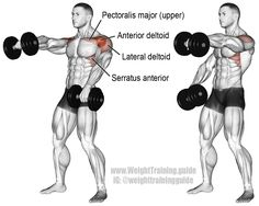 MUSCLE GAINS: Alternating dumbbell front raise. Main muscles wor...