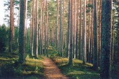 Woods of Svabensverk, Sweden