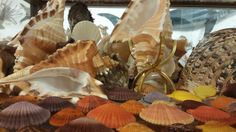 Bellview, WA Shell  Museum