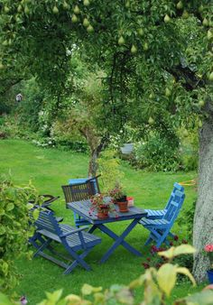 Bright blue chairs under a tree -- pleasure -- oh, and that's a pear tree.