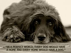 In a perfect world, every dog would have a home, and every home would have a dog. Amen!
