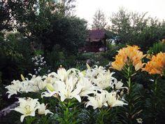 вечер в саду 8 июля