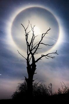 Halo Moon More