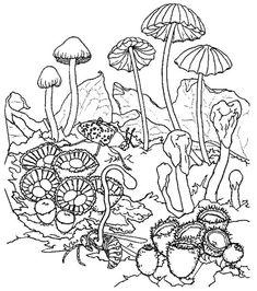 mushrooms mushroom coloring pages