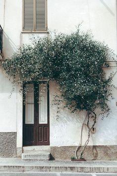"... Jasmin sur une façade ""pin it"" 21/06"