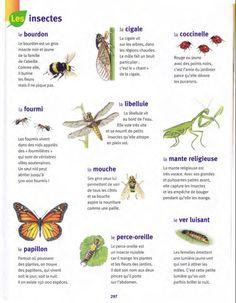 Les noms des insectes