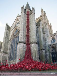 A display of handmade poppies called The Weeping Window opened at #Hereford Cathedral in Hereford, England. #2018