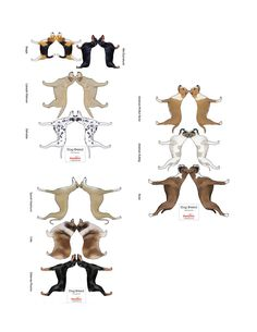Dog Collection Model - Free Paper Toys and Models at PaperToys.com