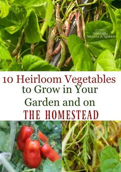 10 Unique Heirloom Vegetables To Grow In Your Home Garden – Melissa K. Organic Vegetables, Growing Vegetables, Home Grown Vegetables, Veggies, Green Bean Seeds, Glass Gem Corn, Organic Insecticide, Vegetable Garden Design, Vegetable Gardening