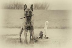 Le chien, le meilleur ami de l'homme… et du hibou. Une amitié étonnante !
