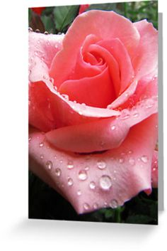 ❀ My #Pink #Rose with #Dew is now on #Redbubble!❀◠‿◠❀  ©#Photography by BluedarkArt  #Clothing, #Stickers, #Cards, #iPhone #Cases, #iPod #Cases and more!   http://www.redbubble.com/people/bluedarkart/works/10191823-pink-rose-with-dew