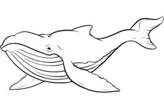 whale outline. black white lines