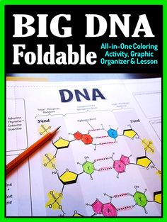 Gr.7-12. Get students to really understand the structure and components of DNA using this large foldable that fits into an interactive notebook or binder.  It functions as an all-in-one lesson, coloring activity and graphic organizer for review.