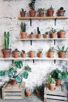 Home cactus succulents indoor succulent wall planter kit. Cacti And Succulents, Planting Succulents, Planting Flowers, Cacti Garden, Small Cactus, Cactus Flower, Cactus Cactus, Flower Cafe, Flower Pots