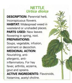 Nettle loaded with nutrients.  Used for thousands of years for their medicinal benefits.