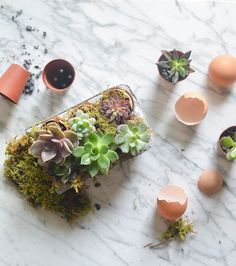 DIY: Easter Egg Succulents now on Eye-Swoon,com