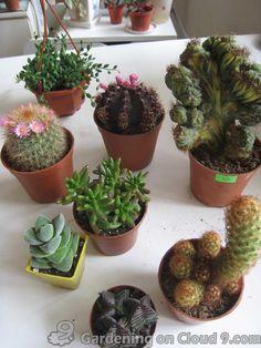 Indoor Cactus Garden Cactus Pinterest Cacti Indoor cactus